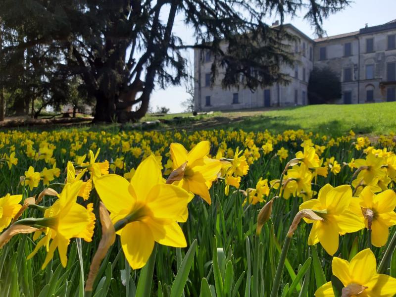 Fiori Gialli 7 Lettere.Con Un Fiore Per Villa Greppi Giardini Aperti Il 7 E Il 14