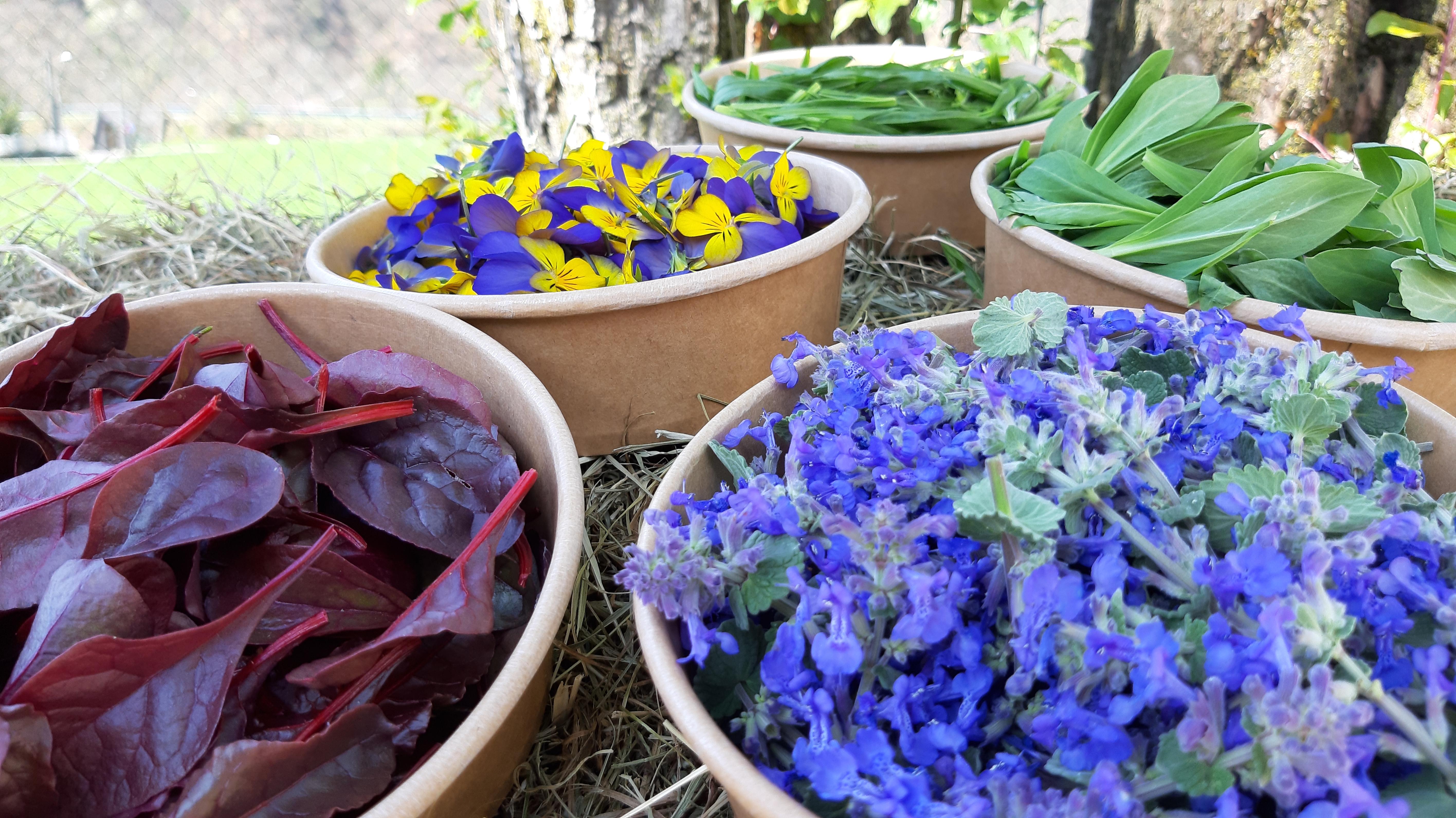 Fiori E Piante Commestibili res naturae un mondo di piante e fiori tutto da mangiare