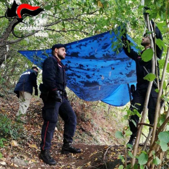 Rogeno zona boschiva carabinieri droga spaccio
