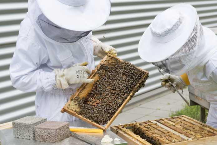 apicoltura apicoltori api